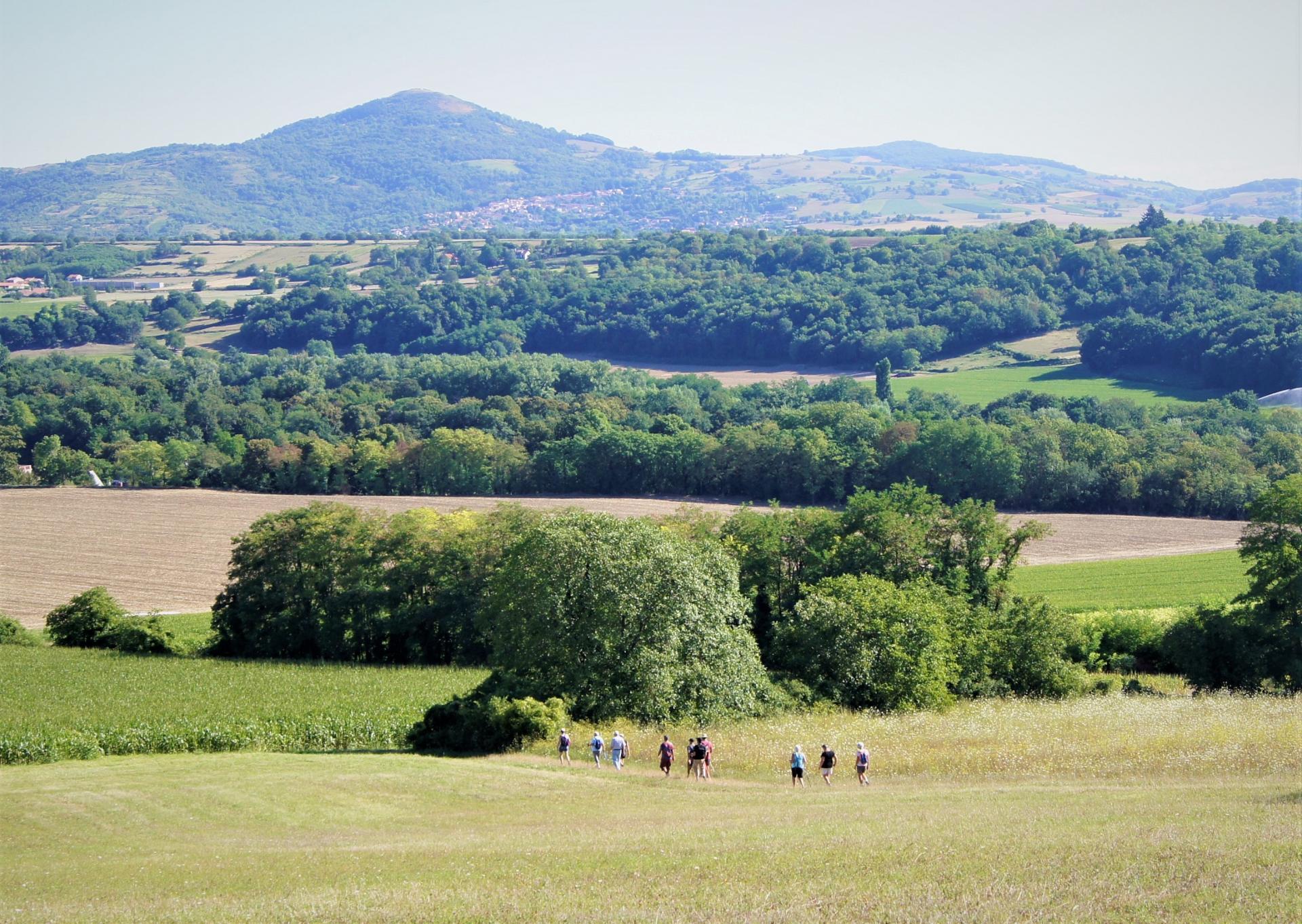 Campagne autour de Montpeyroux