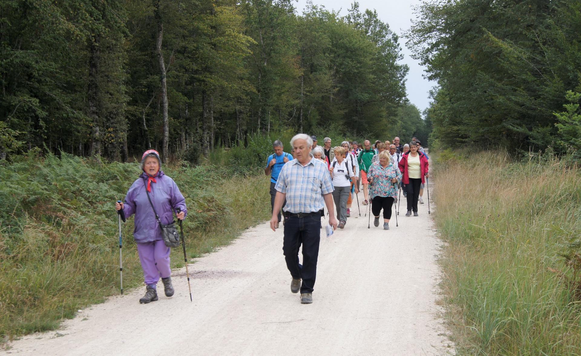 Marcheurs à Tronçais