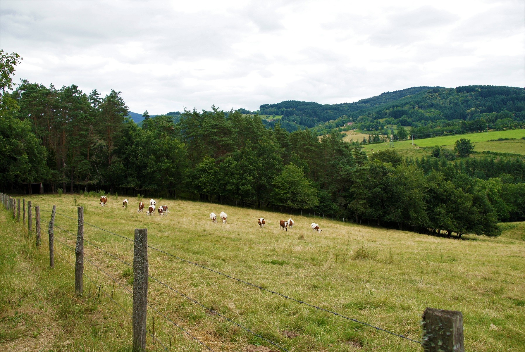 Paysage à Aubusson d'Auvergne2