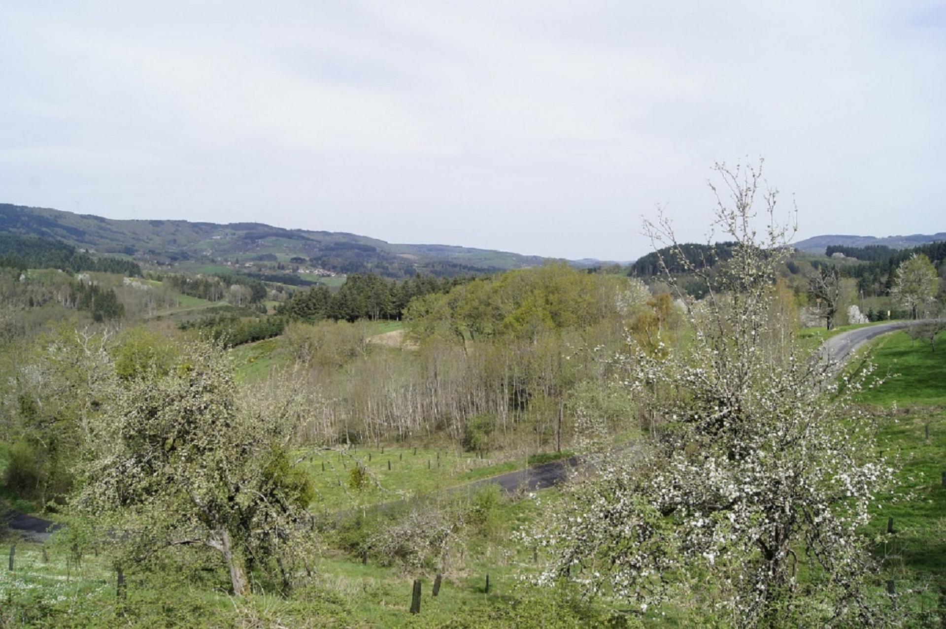 Paysage autour de Laprugne1