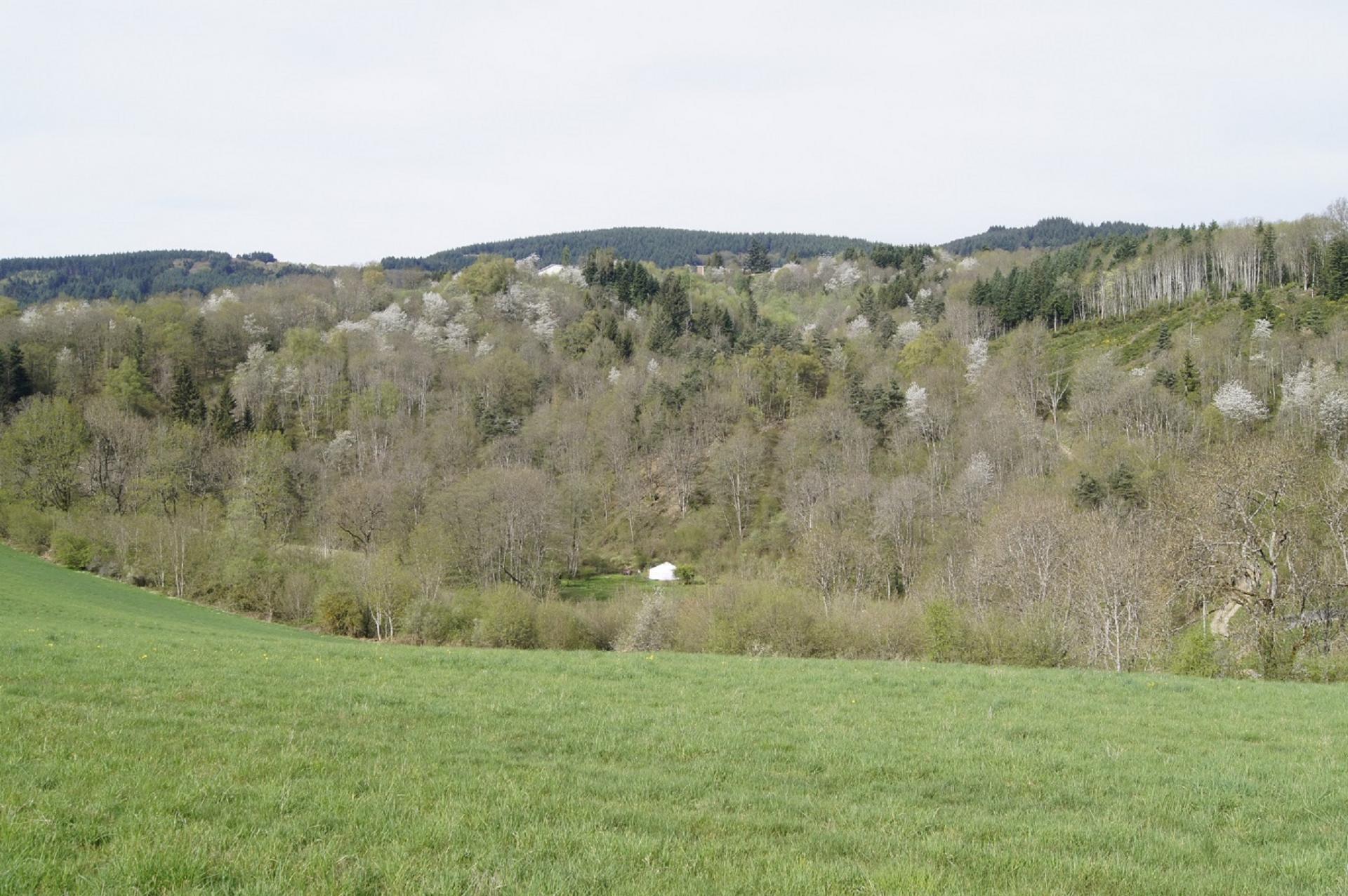 Paysage autour de Laprugne2
